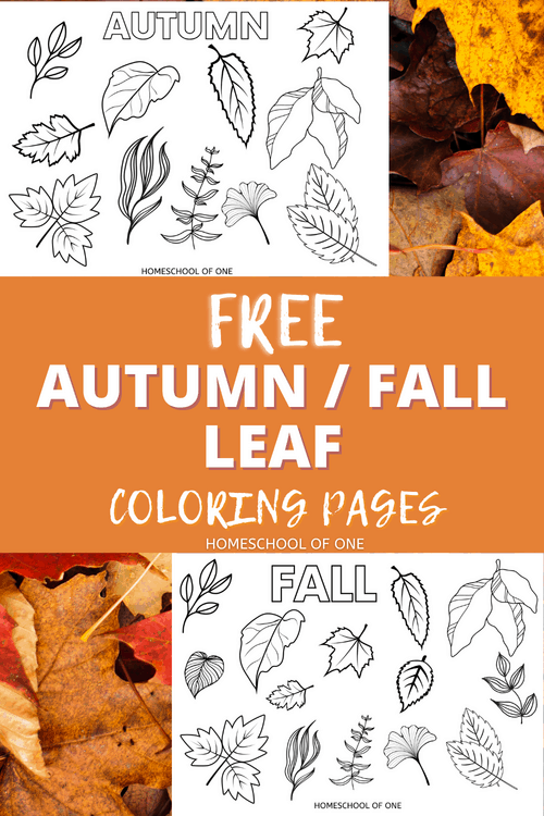Free Autumn & Fall Leaf Coloring Page Free printable! #fall #autumn #leafcolors